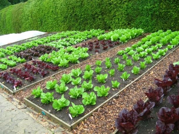 groenten kweken groenten kweken. Black Bedroom Furniture Sets. Home Design Ideas