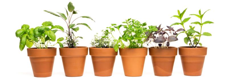 Kruiden planten